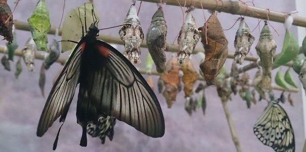 Экспозиция живых тропических бабочек