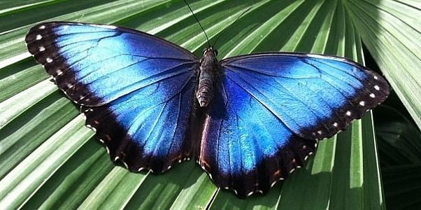 Калейдоскоп экзотических бабочек в Киевском планетарии