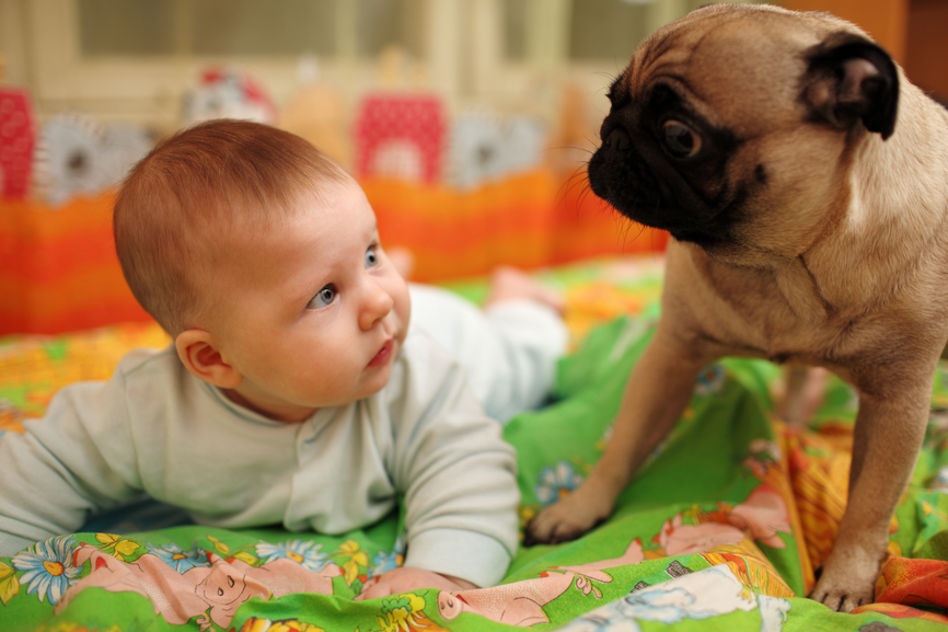 Нужно ли готовить животное к появлению ребенка