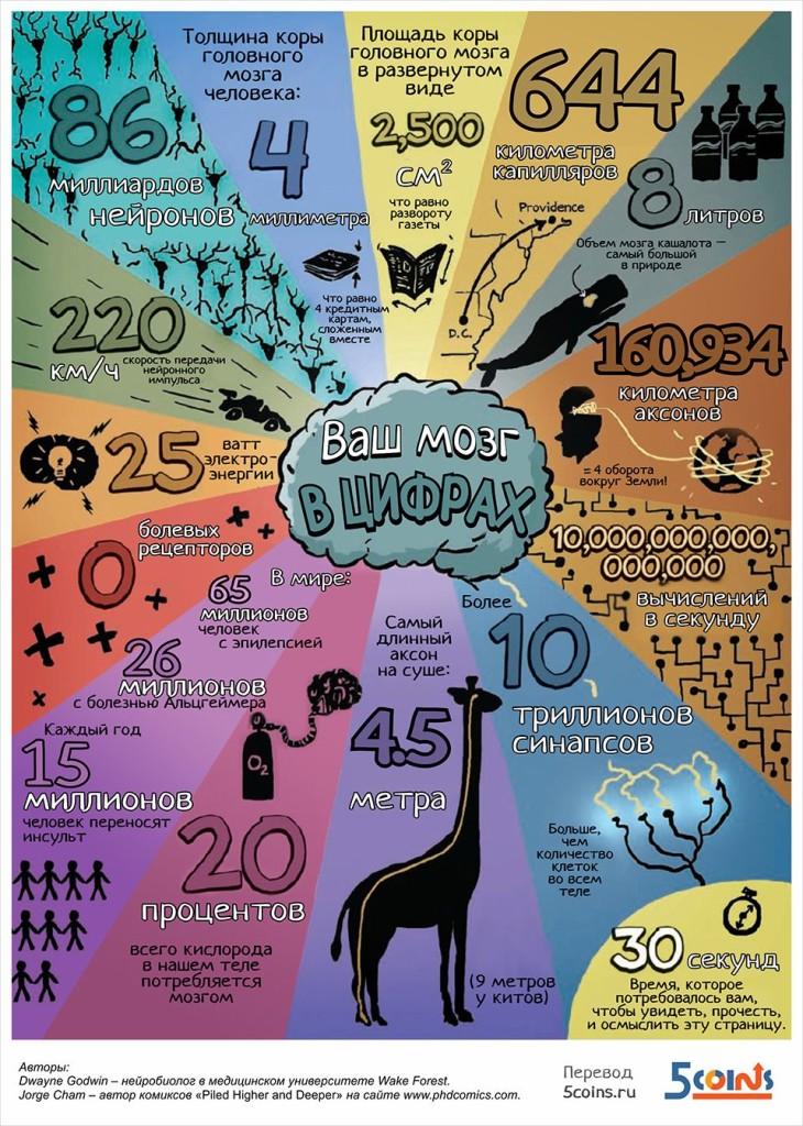 6 занимательных инфографик для детей и взрослых