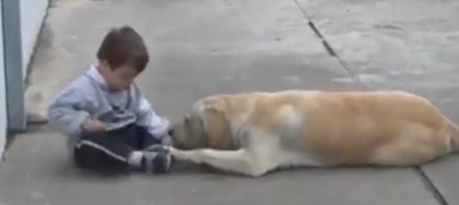 Лабрадор и мальчик с синдромом Дауна (видео)