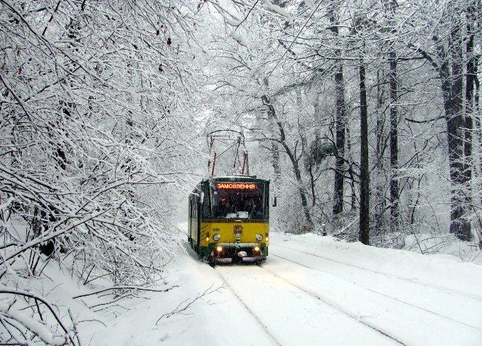 """Экскурсия для детей на трамвайчике """"Зимний лес"""""""