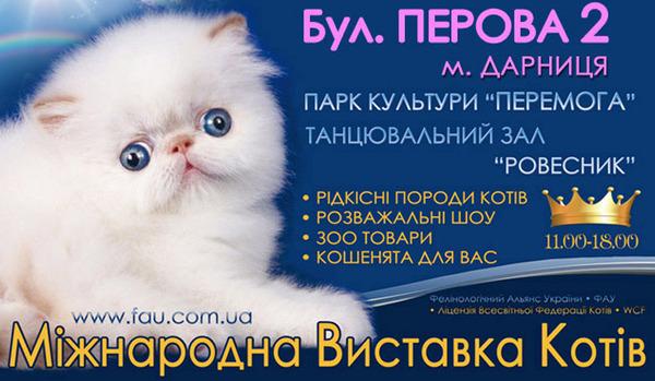 Международная выставка кошек - 2014
