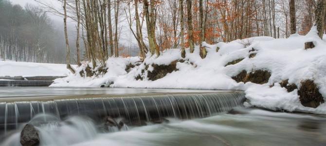 Памятник живой природы Турья Поляна