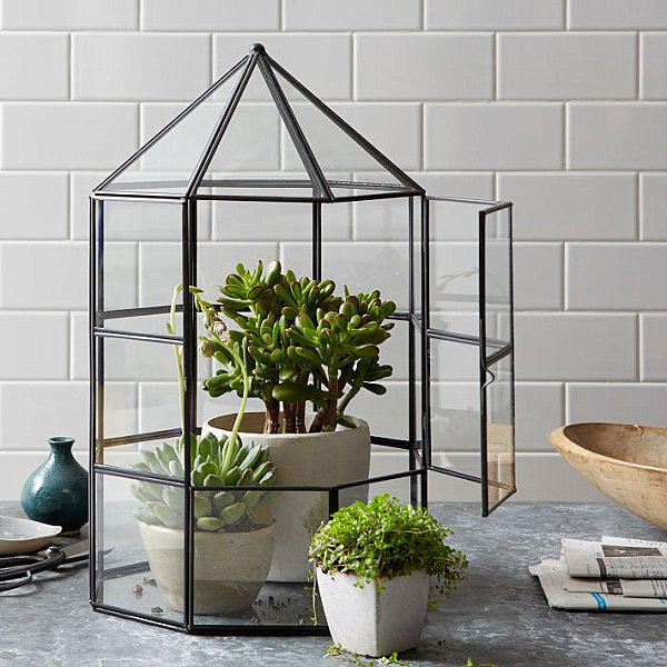 GiftGuide: Стеклянный сад для интерьера