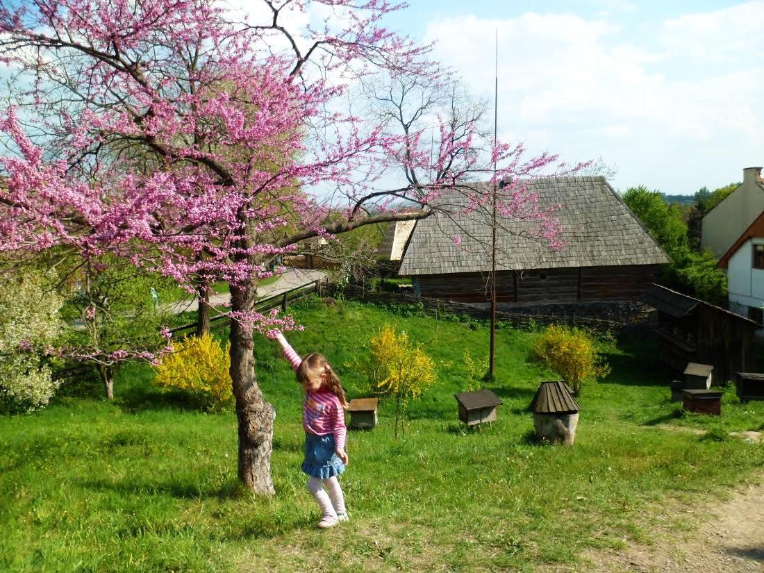 12 мгновений ужгородской весны