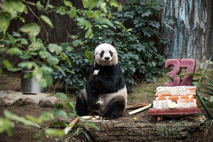 Скандал вокруг Dior, старейшая панда-именинница и эволюция красоты немок за 100 лет