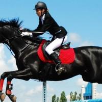 Лучшие конюшни Киева и области