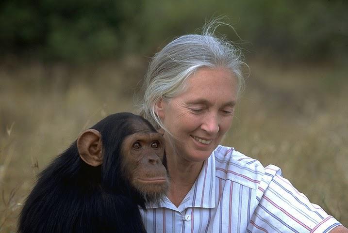 jane_goodall_monkey