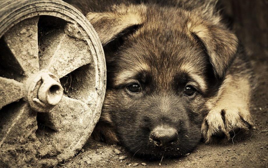15 августа: Всемирный день защиты бездомных животных