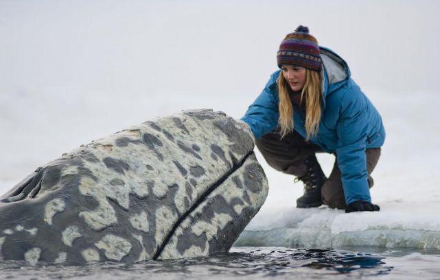Все любят китов, фильм 2012