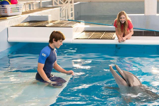 История дельфина фильм