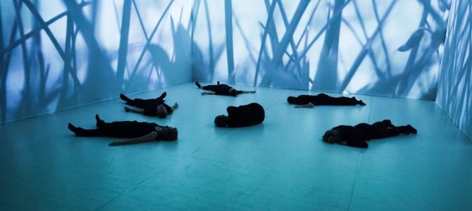 Лучшие спектакли Polish Dance Platform в Киеве