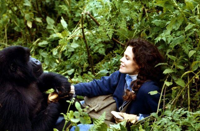 Luchshie-filmyi-v-retsenziyah-Gorillyi-v-tumane-Gorillas-in-the-Mist-The-Story-of-Dian-Fossey-1988-1