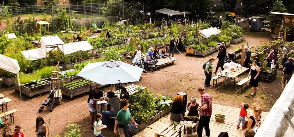 С тяпкой на грядку: В Киеве создадут большой общественный сад-огород