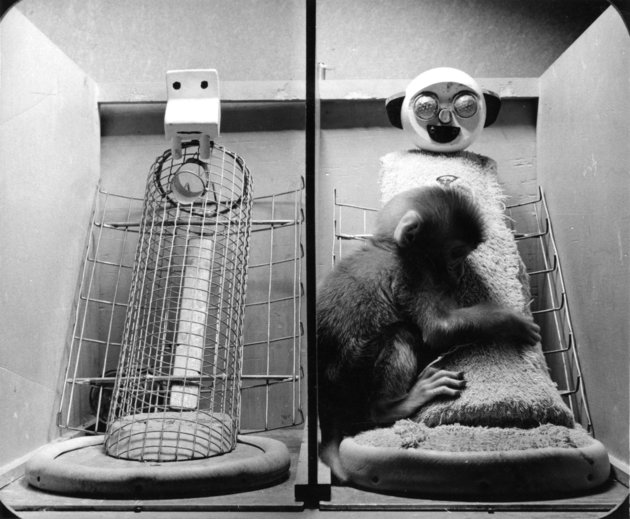 Infant Monkey With Cloth Surrogate Mother