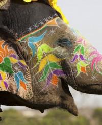 12 мгновений удивительной Индии, или Как путешествовать с ребенком в стране контрастов