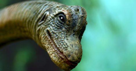 Генезис знаний: 15 документальных фильмов об эволюции