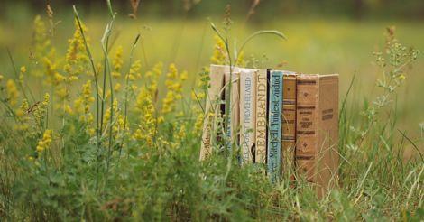 Еще посмотрим, какое будет лето: 15 лучших книг для любого исхода