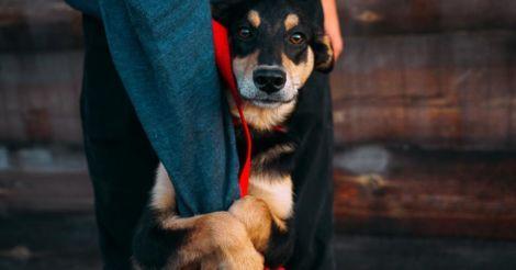 Жизнь и цель собаки: Где найти верного друга себе и детям