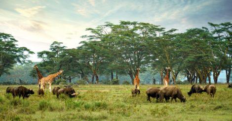 """Моя Кения: """"Большая африканская пятерка"""", лучший пляж для детей и жизнь по законам природы"""