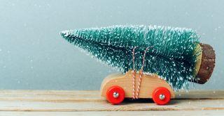 Утилізуй це: 10 пунктів збору новорічних ялинок у Києві