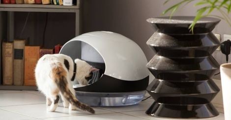 Pet Geek: 5 гаджетів для домашніх тварин