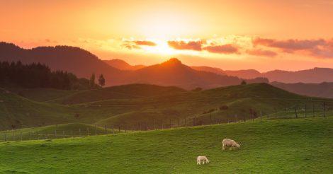 Без insta-фильтров: Чем удивит Новая Зеландия