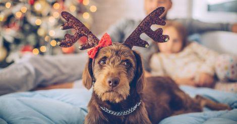 Сознательно: Как позаботиться о любимых собаках в новогодние праздники