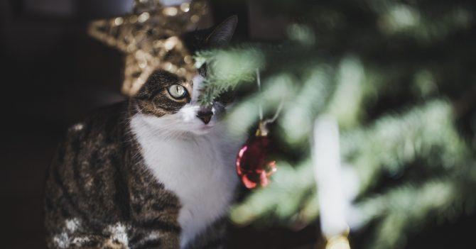 Сознательно: Как позаботиться о котах в новогодние праздники