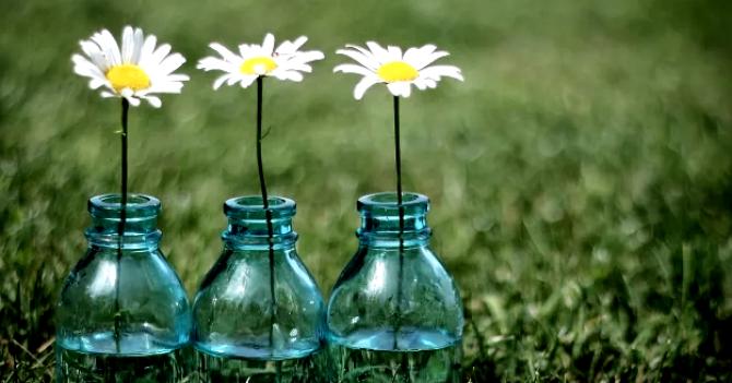 Zero Waste: 5 правил екологічного життя