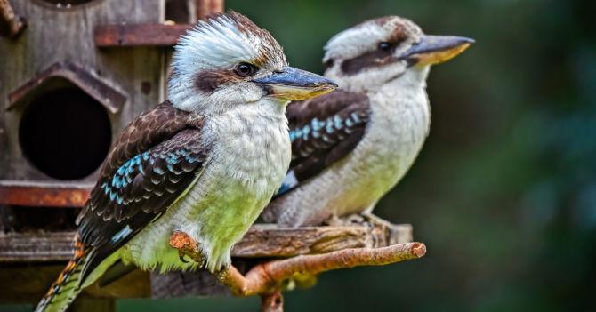 BirdWatching: Хобі та антистрес для усіх
