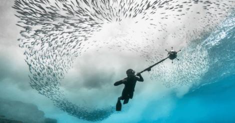 360 Journeys: 5 документальних фільмів про життя на Землі