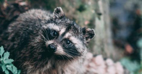 Animal Planet: 9 найкращих документальних фільмів про тварин