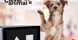 Украинский стартпап создал гаджет для измерения IQ животных