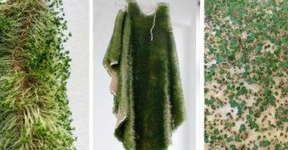 Эко-мех из семян чиа: создала украинка