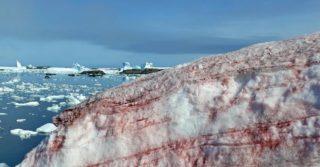 В Антарктиде пошел малиновый снег