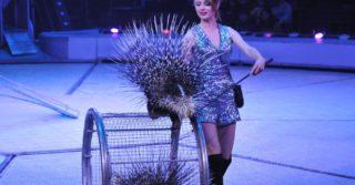 Куда передадут животных из киевского цирка?