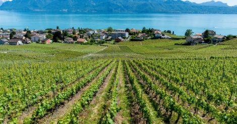 Швейцарский карантин: В эпидемии нейтралитета не бывает