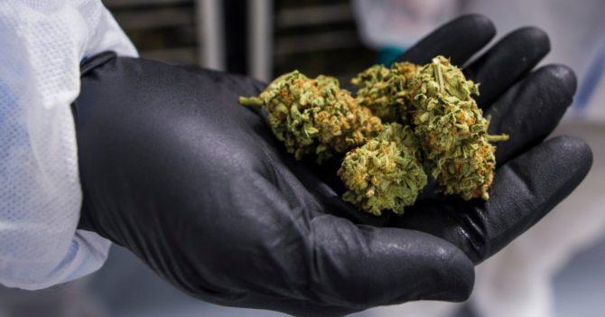 Верховна Рада легализовала препараты на основе медицинского канабиса