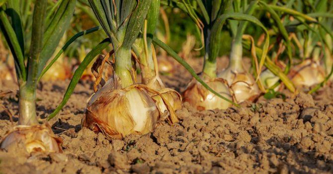 Украинским фермерам некуда девать продукцию