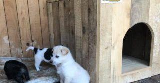 Собачий приют в Прикарпатье затопило