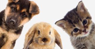 Кабмин: Конфискованных домашний животных будут передавать приютам