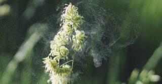 7 продуктов, которые помогают облегчить симптомы сезонной аллергии