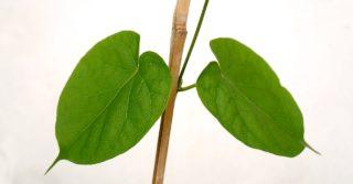 Возможна ли быстрая детоксикация легких?