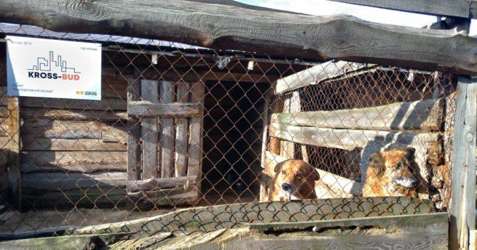 Приют для животных Сириус открыл сбор денег на реконструкцию