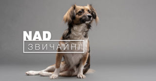 «NADзвичайні» животные в фотопроекте от Happy Paw