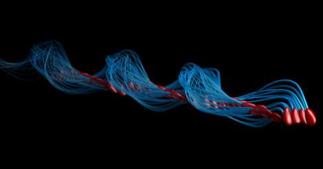 Как на самом деле двигаются сперматазоиды: ученые показывают
