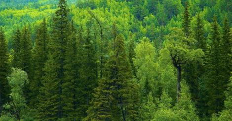 Из-за вырубки лесов человечество ждет гибель: исследование