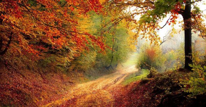 """Регулярные прогулки на свежем воздухе с """"восхищением"""" могут творить чудеса с эмоциональным здоровьем"""